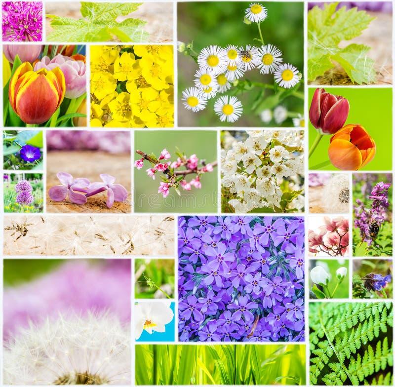 Kolaż kwiaty i zwierzęta podczas wiosna czasu na biel płytce obrazy stock