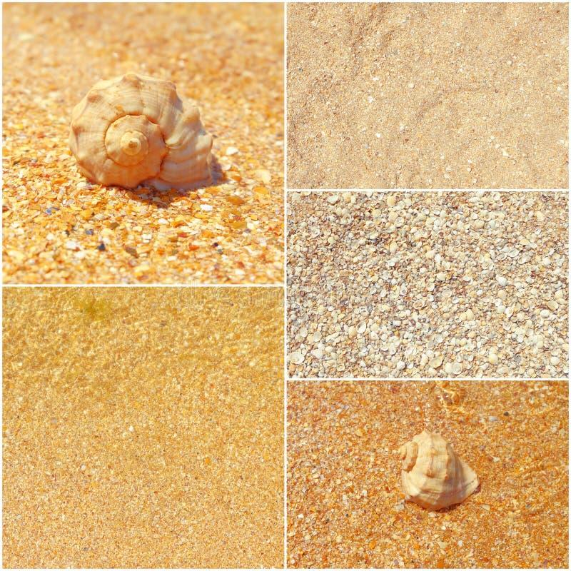 Kolaż lato denne fotografie, seashells na piasku, set stonowani wizerunki zdjęcia royalty free