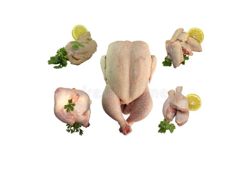 Kolaż odizolowywający na białym tle kurczak obrazy royalty free
