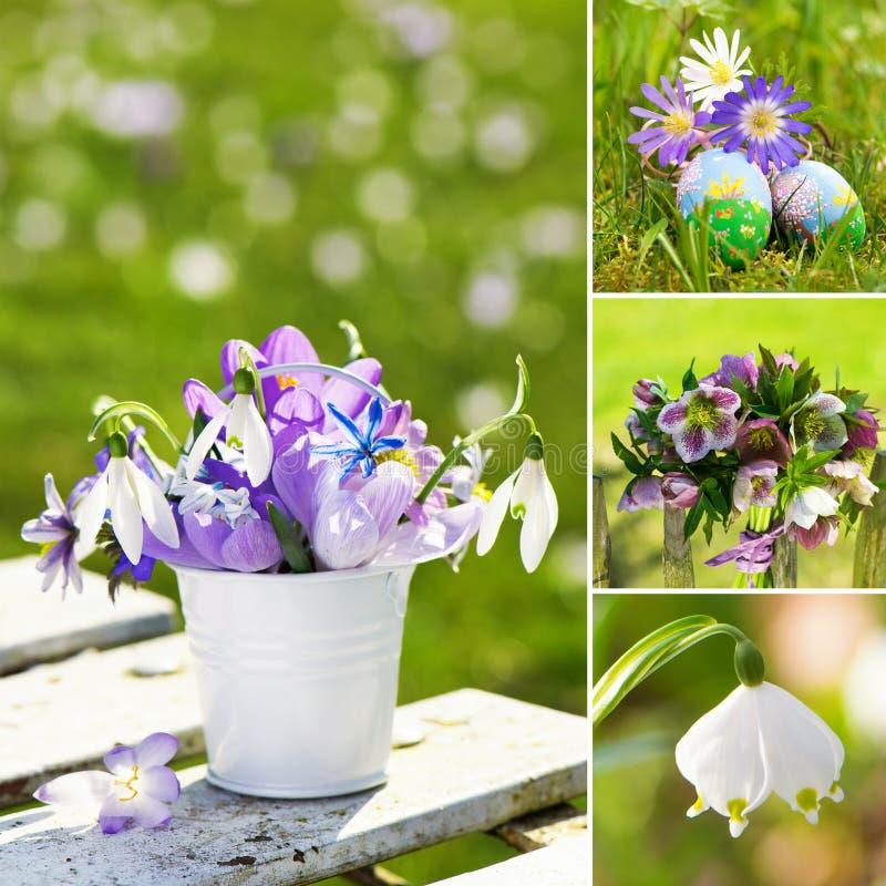 Kolaż różnorodni obrazki wiosna kwiaty zdjęcie royalty free