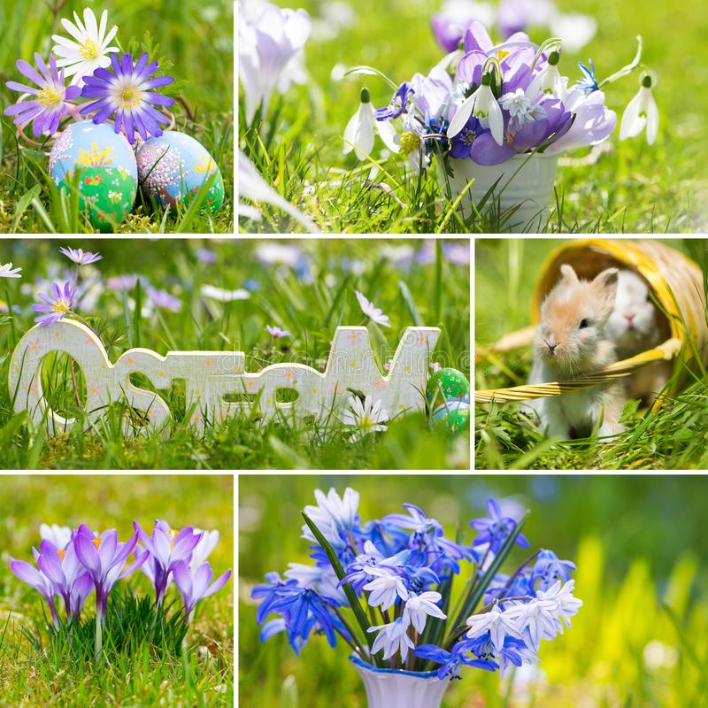 Kolaż różnorodni obrazki wiosna kwiaty zdjęcia stock