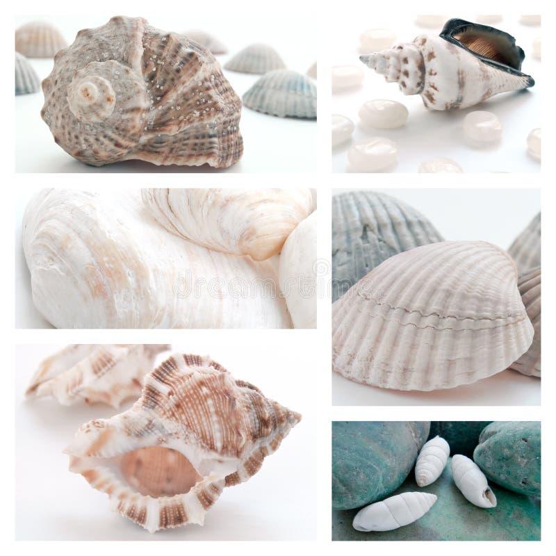Kolaż seashells obraz stock