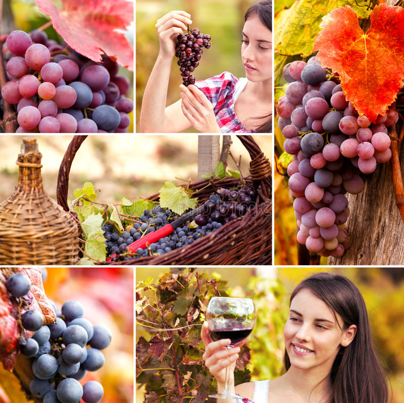 Kolaż winogrono i winograd fotografia royalty free