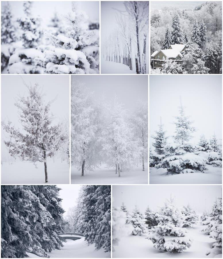 Kolaż zim drzewa obrazy royalty free