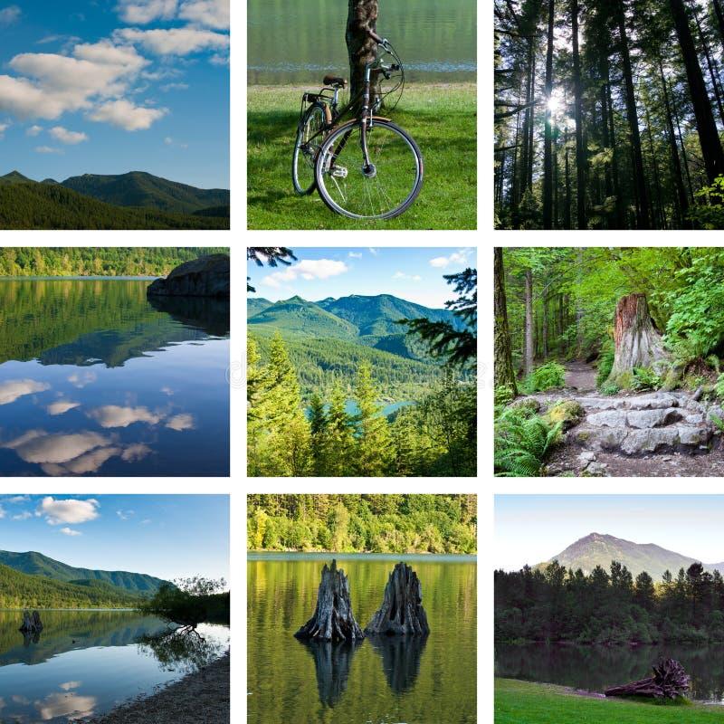 kolażu ślad lasowy target4011_0_ jeziorny obrazy stock