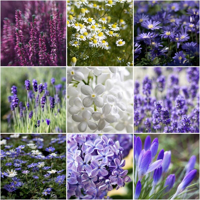 kolaży piękni kwiaty obraz royalty free
