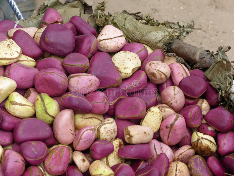 Kola nuts stock photo  Image of market, horizontal, african - 33729162