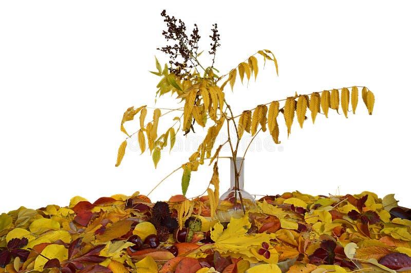 Kolba z sprig astilba z kolorem żółtym opuszcza wśród różnorodnych jesień liści obraz royalty free