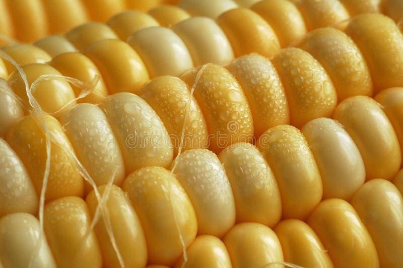 kolby kukurydzy fotografia stock