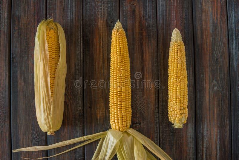kolby kukurydzy fotografujący tła white Słodka kukurudza na stole fotografia royalty free