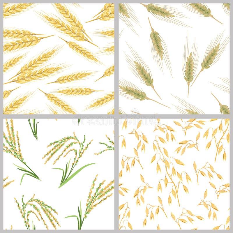 Kolce banatka, owsy, ryż i żyto, Set zbożowych ucho bezszwowi wzory ilustracja wektor