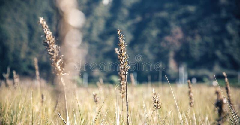 Kolce w łące nad natury tłem obrazy royalty free