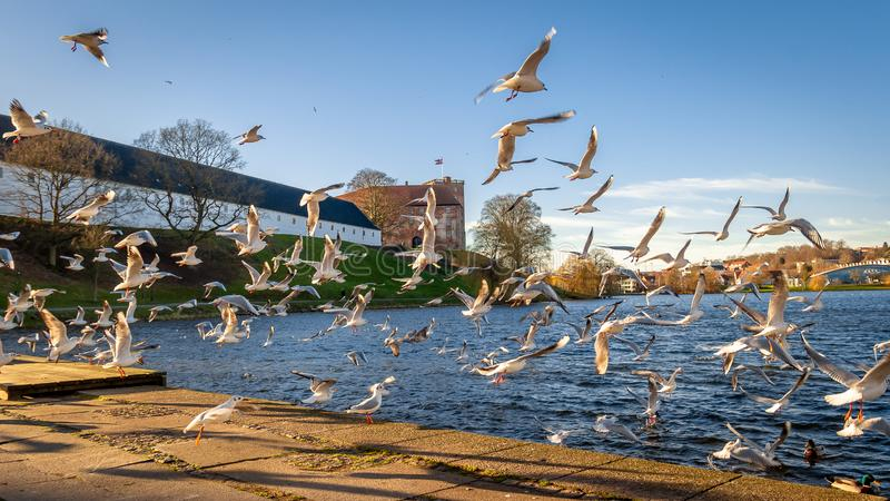 Kolding, Denmark - Seagulls Flying by the Waterfront. Seagulls Flying by the Waterfront in Kolding, Denmark royalty free stock photos