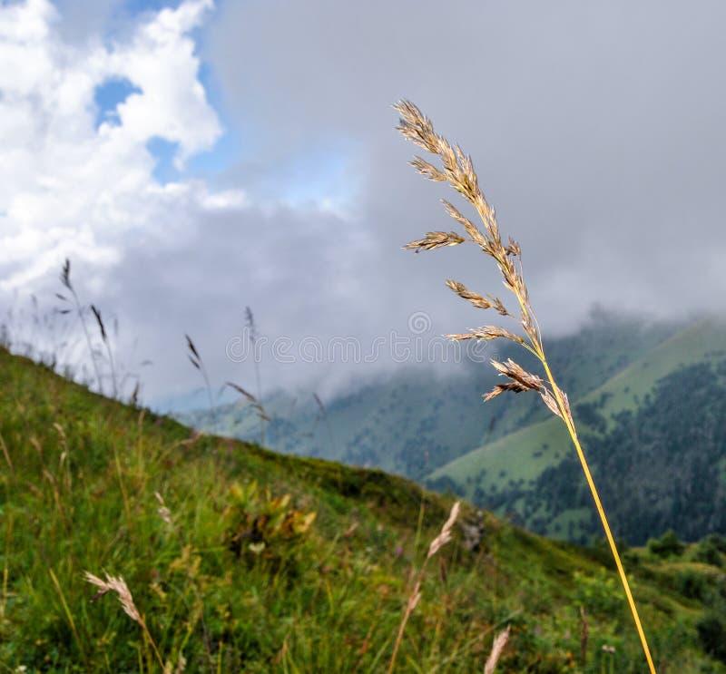 Kolec w, łąka zakrywająca z chmurami i obraz stock