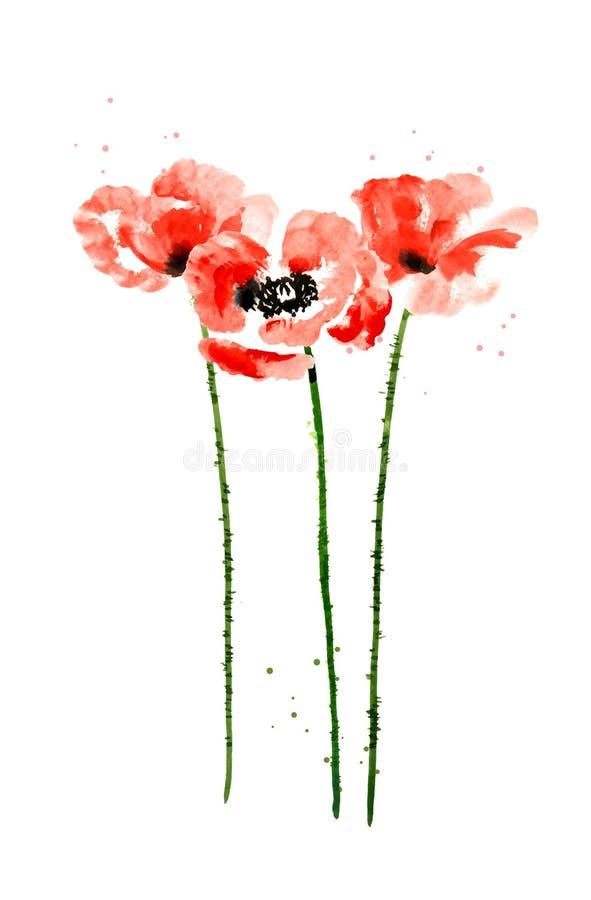 Kolekcja akwarela makowi kwiaty royalty ilustracja