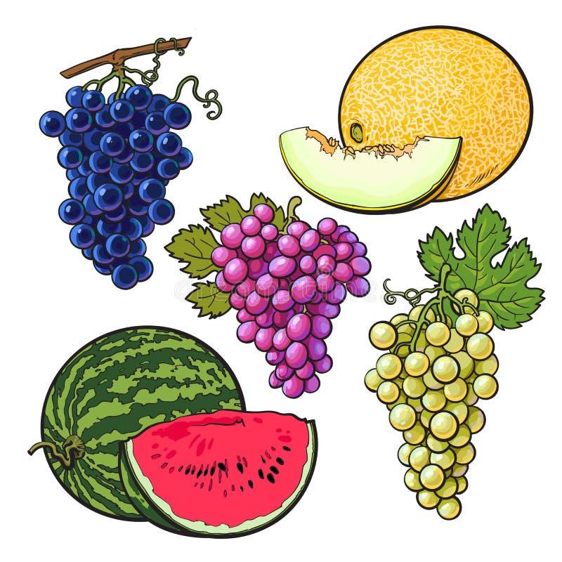 Kolekcja czerwień, zieleń, purpurowi winogrona, melon i arbuz, ilustracja wektor