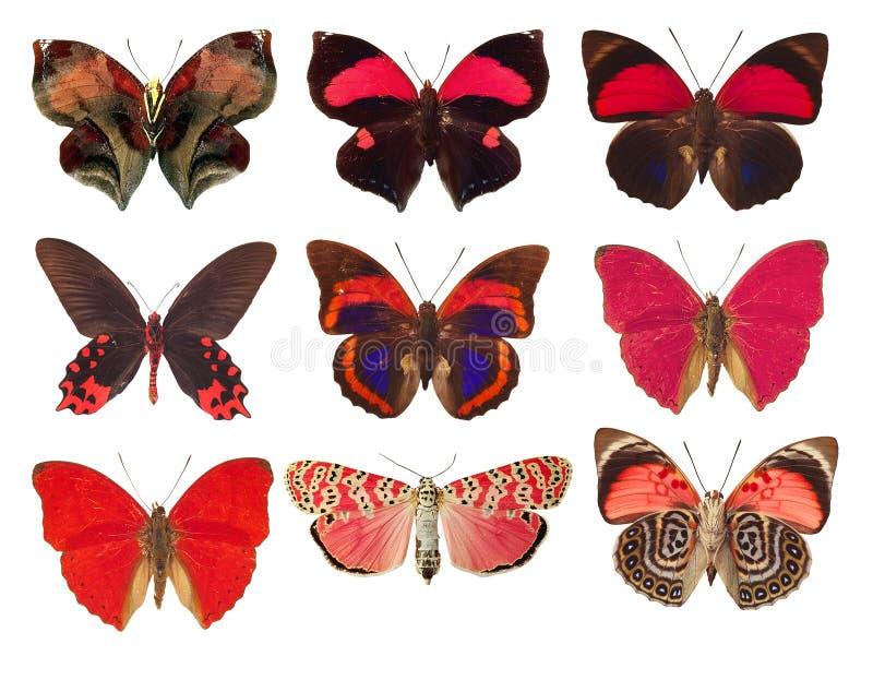 kolekcja czerwoni motyle na białym tle zdjęcia stock