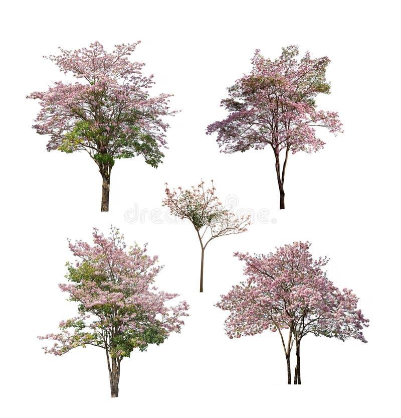 Kolekcja drzewa z menchia kwiatem odizolowywającym na białym tle fotografia stock
