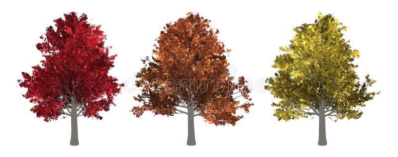 Kolekcja drzewo Klonowy drzewo Odizolowywający na Białym tle zdjęcia stock