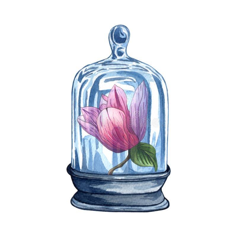 Kolekcja florariums, akwarela słój z różowym magnoliowym kwiatem royalty ilustracja