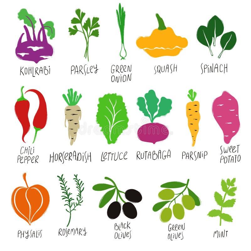 Kolekcja Kolorowi warzywa ilustracji