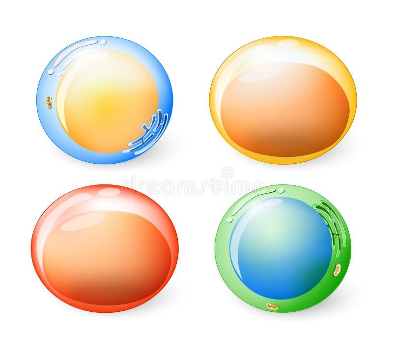 Kolekcja komórki dla twój projekta ilustracji