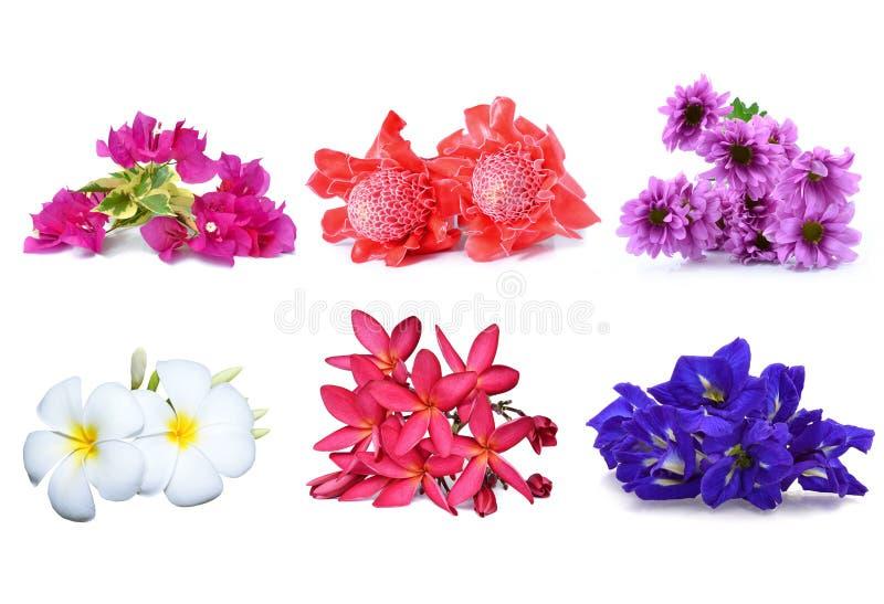 Kolekcja kwiat obraz stock