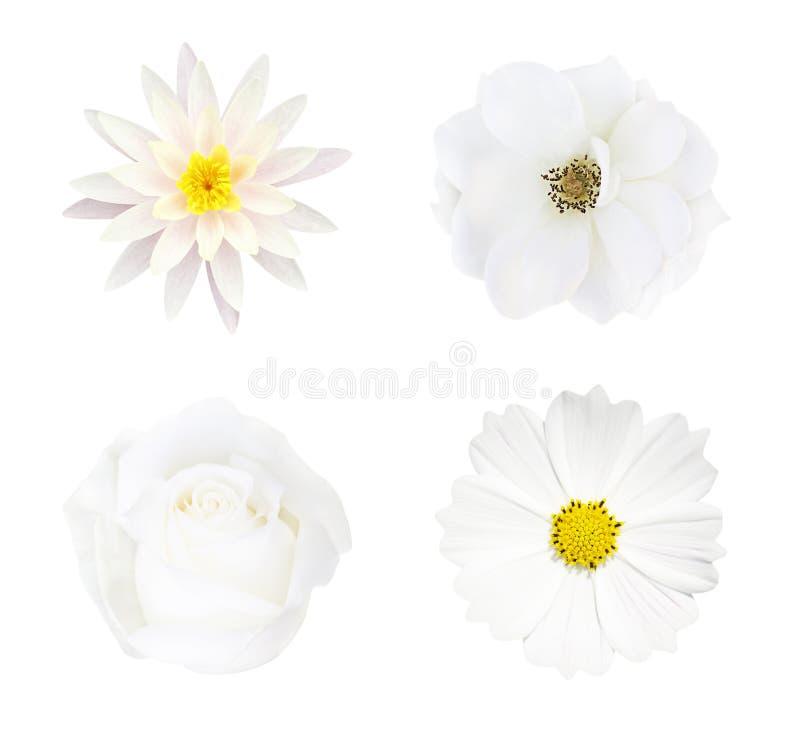 Kolekcja odizolowywająca na białym tle, miękkiej ostrości i ścinek ścieżce biały kwiat, zdjęcia royalty free