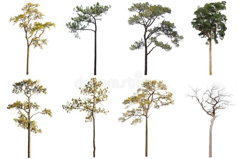 Kolekcja Odosobneni drzewa na białym tle, A beautif obraz stock