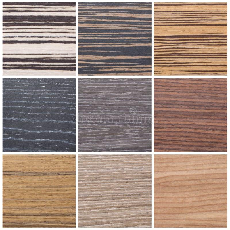 Kolekcja pasiaste drewniane tekstury fotografia royalty free