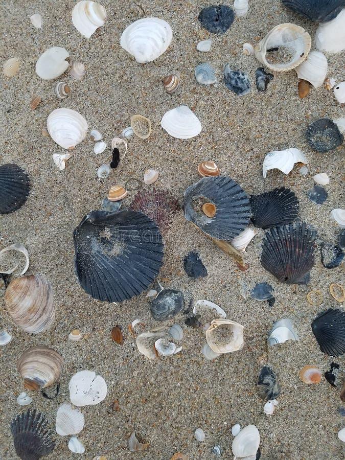 Kolekcja różni seashells w piasku obrazy stock