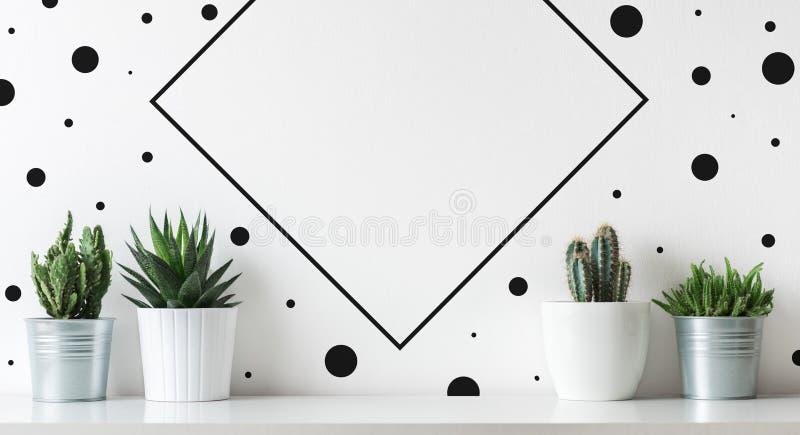 Kolekcja różnorodne kaktusa i sukulentu rośliny w różnych garnkach Doniczkowe kaktusa domu rośliny na białej półce obrazy stock