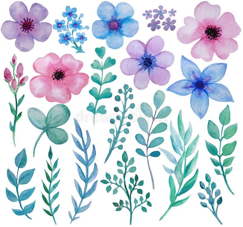Kolekcja ręka rysujący akwarela kwiaty i ziele odizolowywamy na białym tle ilustracja wektor