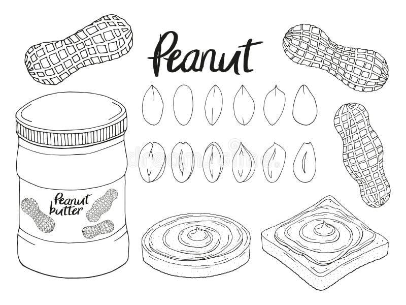 Kolekcja ręka rysujący arachid, chleb ilustracji
