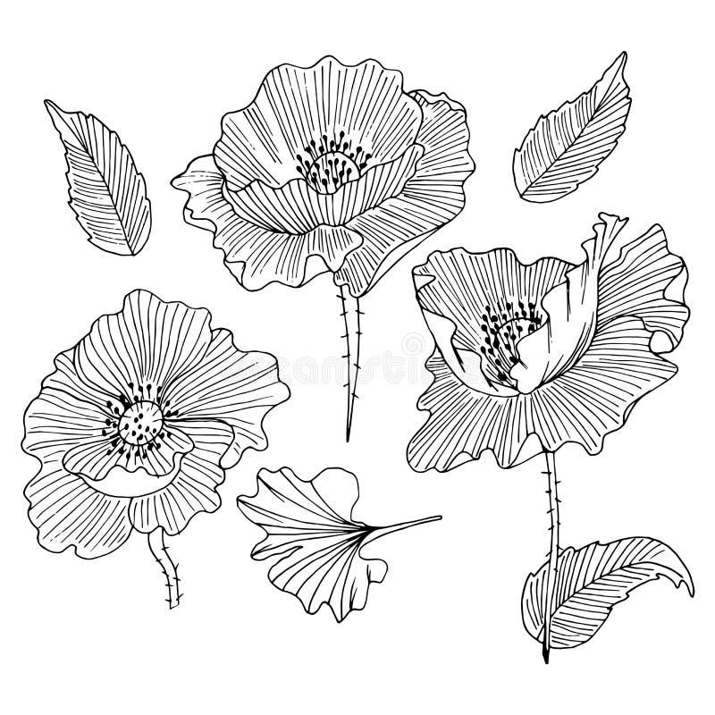 Kolekcja ręka rysujący maczki ilustracji