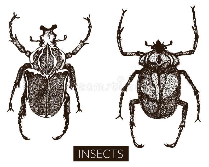 Kolekcja ręki rysować insekt ilustracje ilustracji
