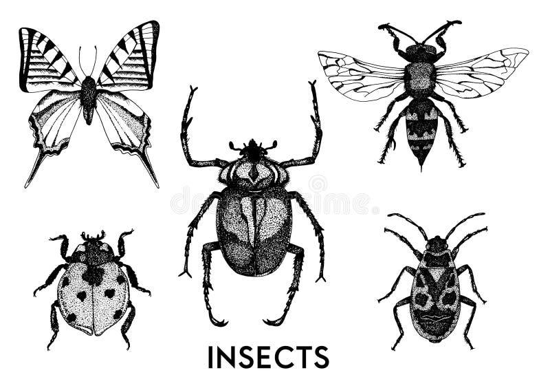 Kolekcja ręki rysować insekt ilustracje ilustracja wektor
