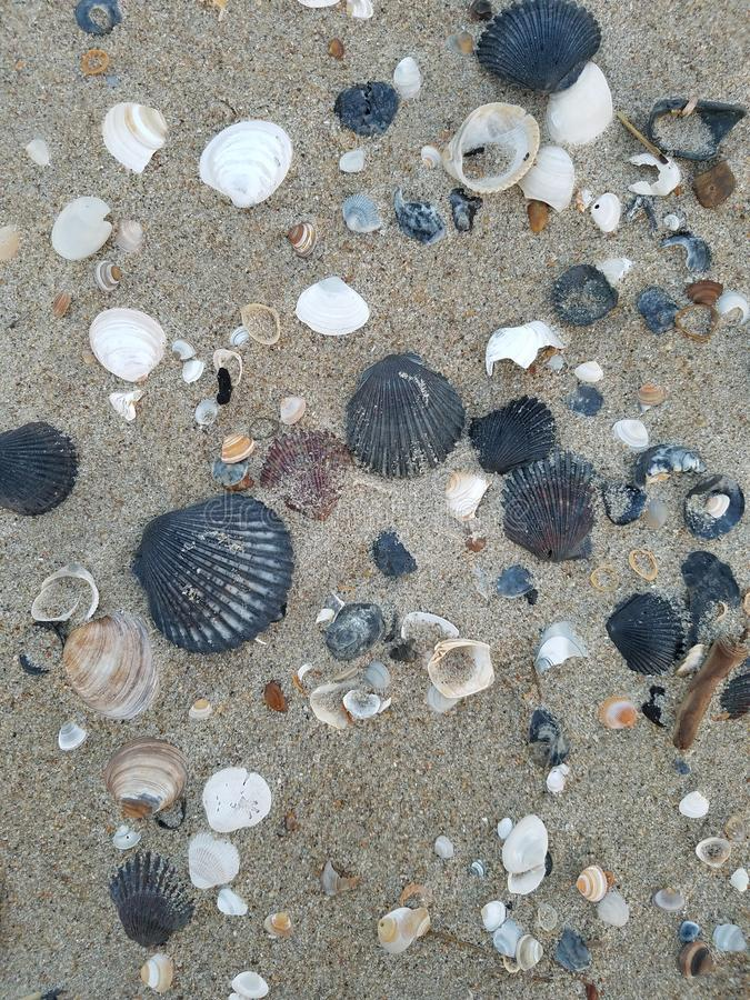 Kolekcja r??ni seashells w piasku fotografia royalty free