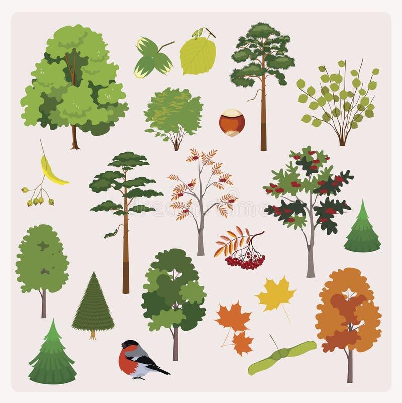 Duża kolekcja realistyczni lasowi drzewa, gryźć, opuszcza, royalty ilustracja