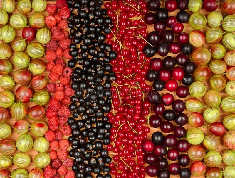 Kolekcja rozmaitość owoc rodzynki, agresty, raspberrie obrazy royalty free