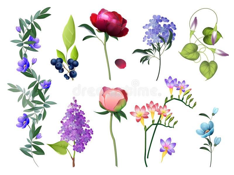 kolekcja rysować kwieciste ręki ilustracje Poślubiający kwiaty z liści wektorowych barwionych kwiatów botanicznymi obrazkami usta royalty ilustracja