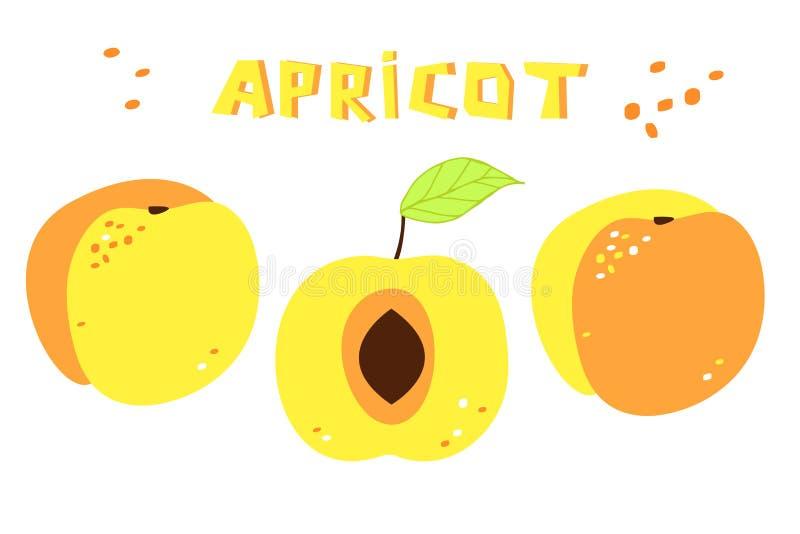 Kolekcja rysunek morele: dwa całych owoc i pokrojonych jeden moreli ilustracji