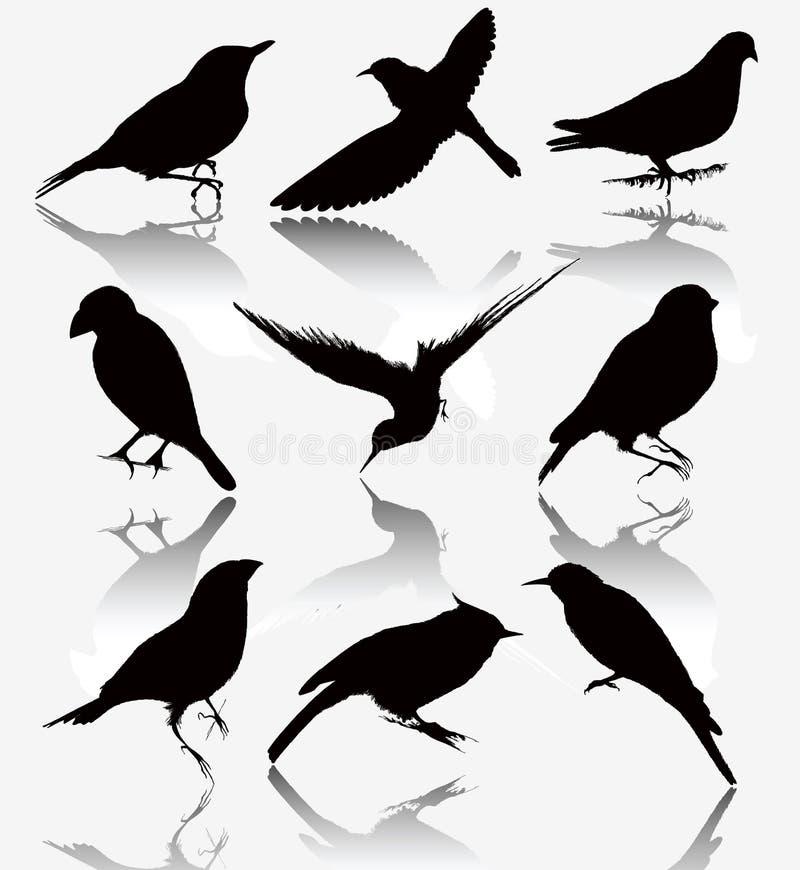 Kolekcja sylwetki dzicy ptaki, wektor il royalty ilustracja