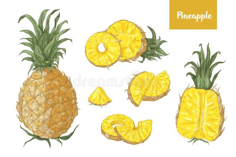 Kolekcja szczegółowi botaniczni rysunki ananasy i plasterki odizolowywający na białym tle cali i rżnięci Set royalty ilustracja