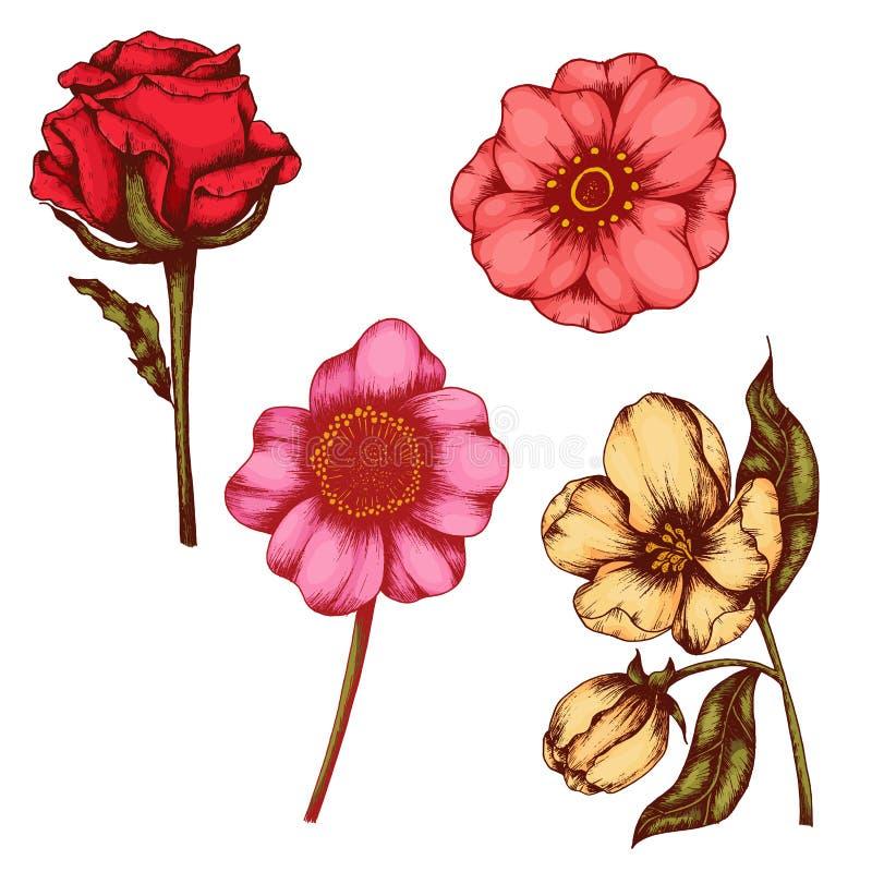 Kolekcja szkiców kwiatowych i liściastych - malowanie narysowane ręcznie royalty ilustracja