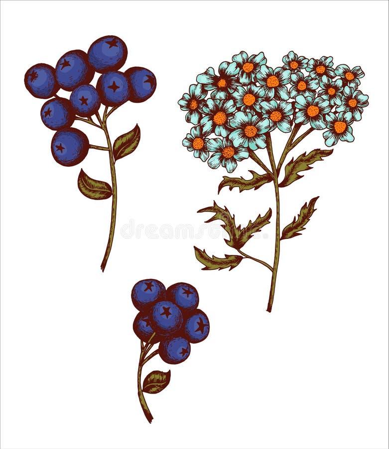 Kolekcja szkiców kwiatowych i liściastych - malowanie narysowane ręcznie ilustracja wektor