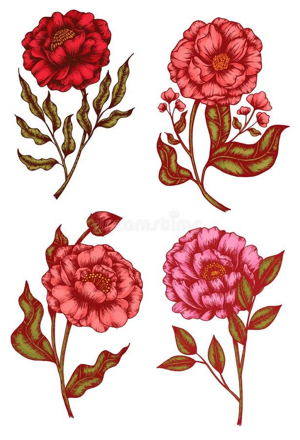 Kolekcja szkiców kwiatowych i liściastych - malowanie narysowane ręcznie ilustracji