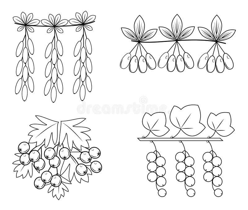 Kolekcja To jest gałąź berberys pospolity, głóg, dereń, rodzynki Po?ytecznie smakowite jagody dla zdrowie i medycyny Graficzny wi ilustracji