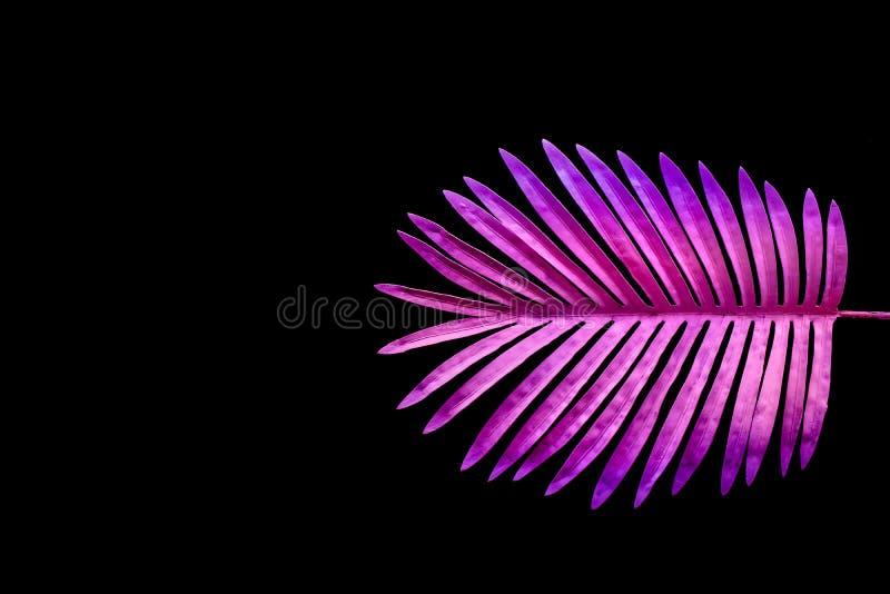 Kolekcja tropikalni liście, ulistnienie roślina w kolorowym gradiencie na czerni przestrzeni tle fotografia royalty free