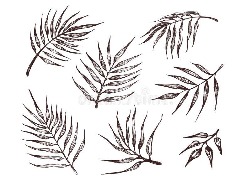 Kolekcja tropikalni li?cie Ręka rysująca ilustracja palmowi liście Dla wzoru, logo, szablon, sztandar, plakaty, zaproszenie ilustracji